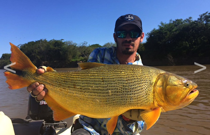 Golden Dorado fishing, Parana river