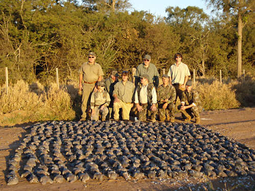 Dove shooting Salta
